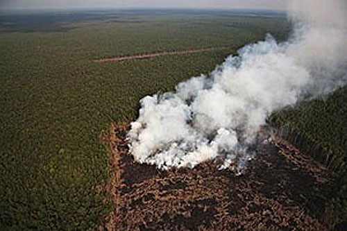 Indonesia Rain Forest on Fire
