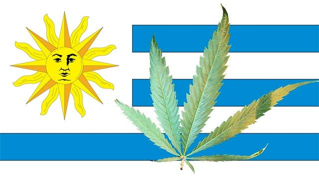 legalizing marijuana in uruguay Experiments with legalizing marijuana in colorado, washington, and uruguay have countries as diverse as morocco and the netherlands rethinking how they approach the drug.